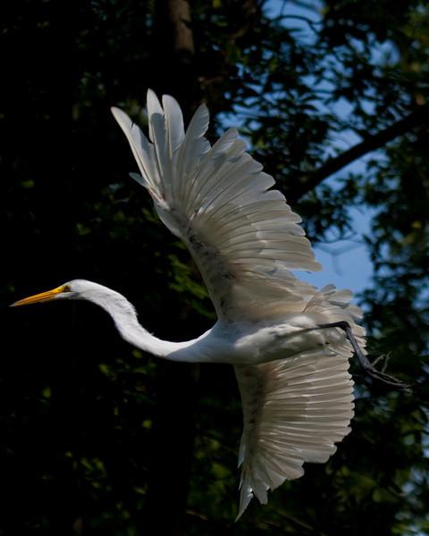 Great egret; fermilab