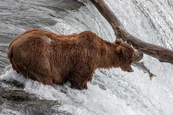 2018 Alaska Washington - 2 Stars