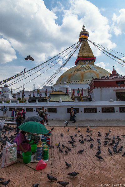 THe Pigeons of Boudhanath