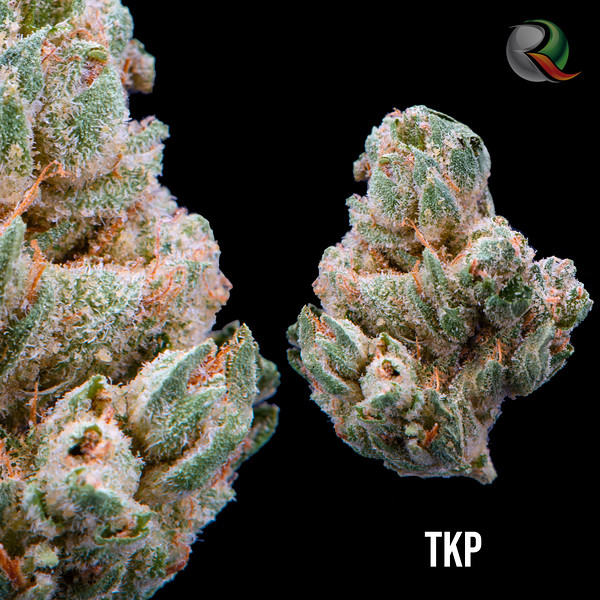 TKP2.jpg