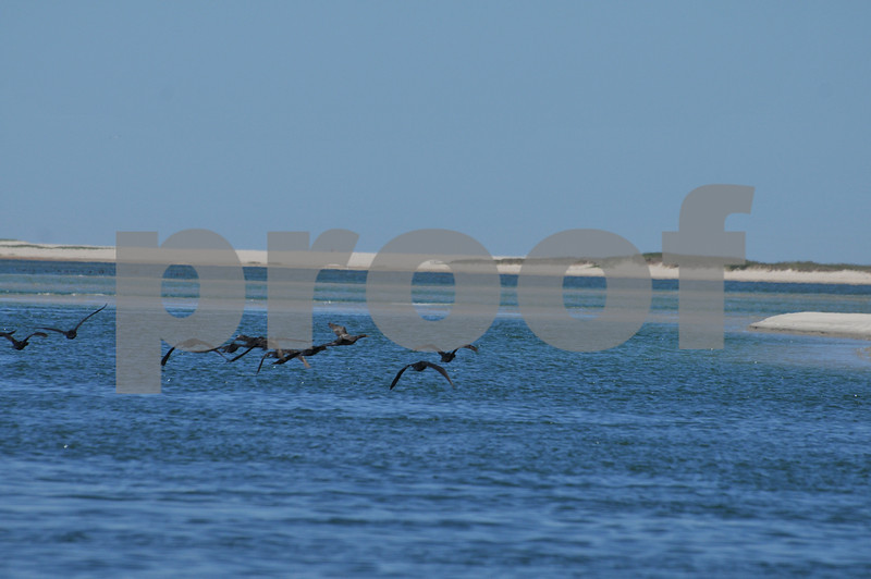 Pictues from cape and father day 120.JPG