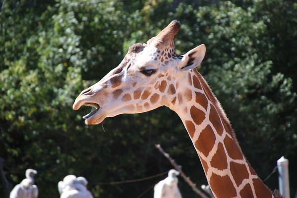 2016 Cheyenne Mountain Zoo