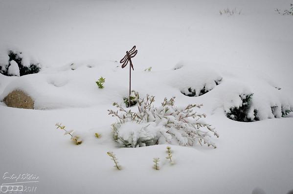 08-OCT-2011 - First Snow of 2011-2012 Season