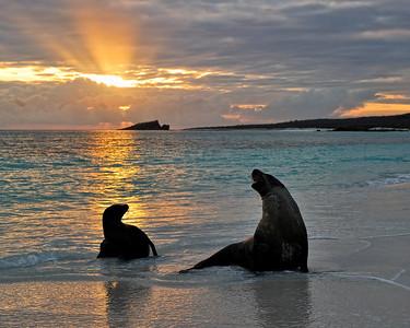 Galapagos - Mammals, landscapes, towns
