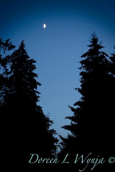 Night sky with moon silhouette_6081.jpg