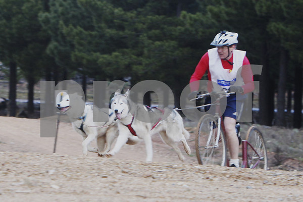 Kowen 2010 - Saturday 2 Dogs