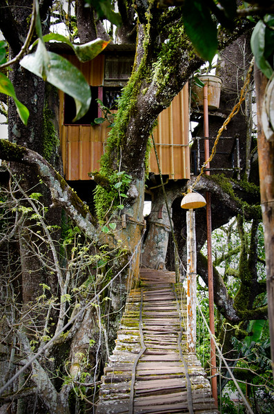 Treehouse on the highlands tour. $1 to visit.