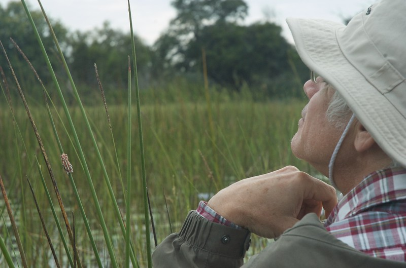 Frog, Okavango Delta - Leslie Rowley