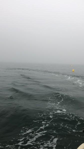 Chatham Kelp