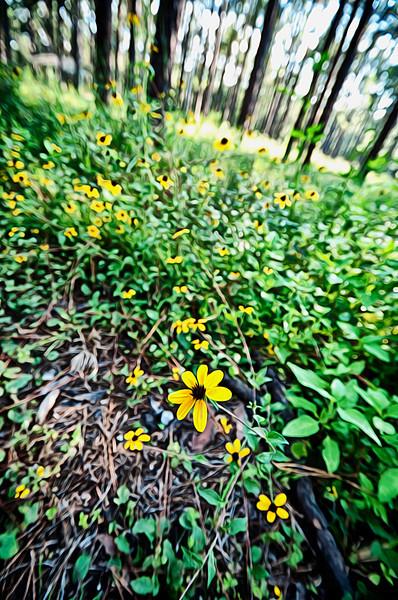 pretty flower_HDR.jpg