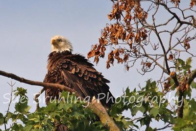 2013 Decorah Eagles