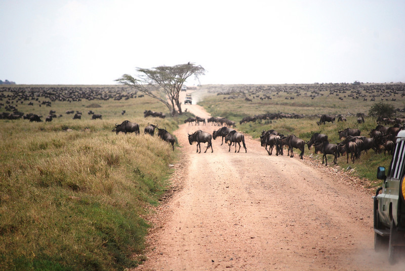 Serengeti (62).JPG