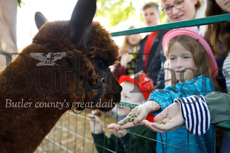 Honor Christensen, 6, feeds Baldor the Alpaca from Asgard Acres Alpaca Farm at Zelienople Fall Festival Saturday. Seb Foltz/Butler Eagle 2019