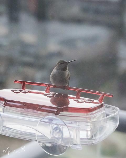 2021 - The Hummingbird Chronicles-1328_edit-2.jpg