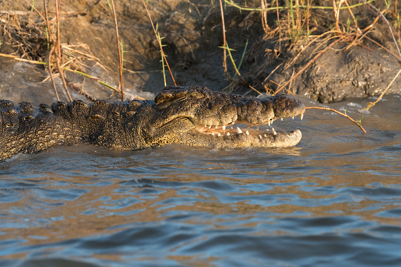 Botswana_June_2017 (6101 of 6179).jpg