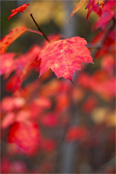 20111019_Autumn03.jpg