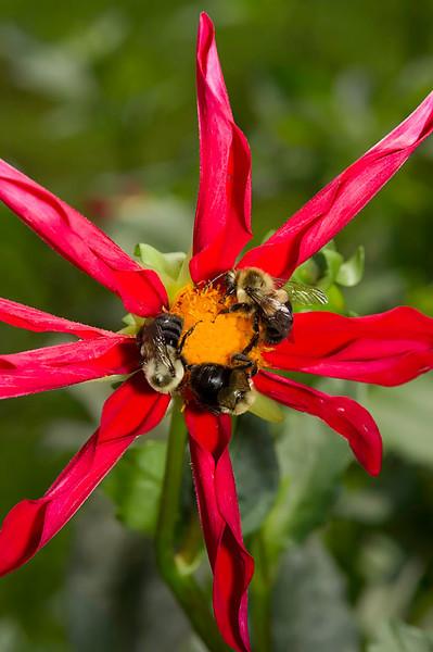 beesflysdragonflies