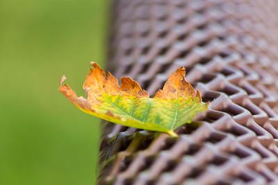 Autumn Foliage Page