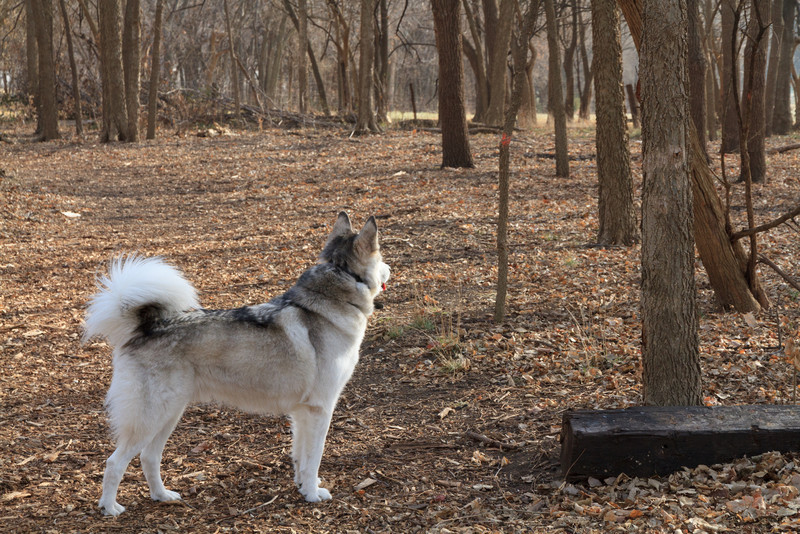 Blue in the woods at the Ranch