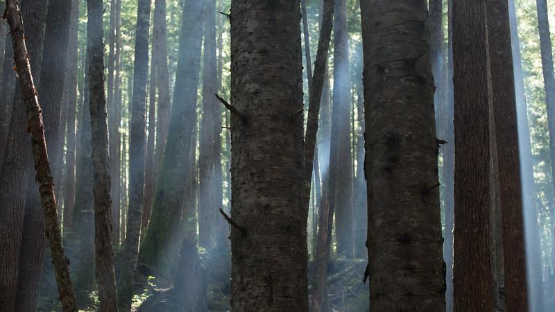 150913_Nikki_Forest_5412.jpg