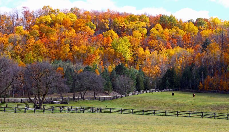 Hockley Valley Horse Farm Wide.jpg