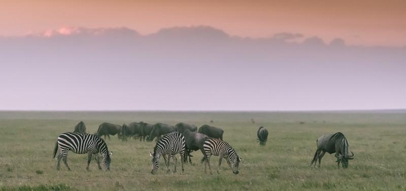 Tanzania_Feb_2018-630.jpg