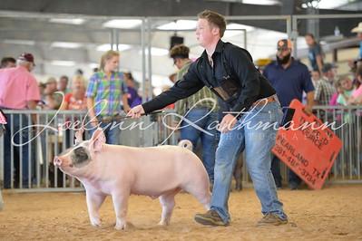 Market Hog Ringshots - 1