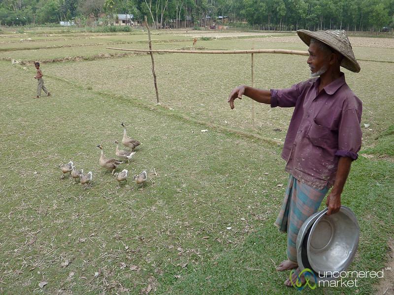 Herding Geese? Outside Srimongal, Bangladesh