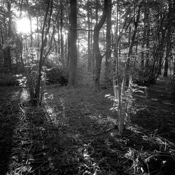 boslicht1.jpg