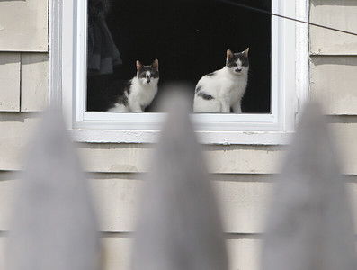 Cats in window, sparrow 051620