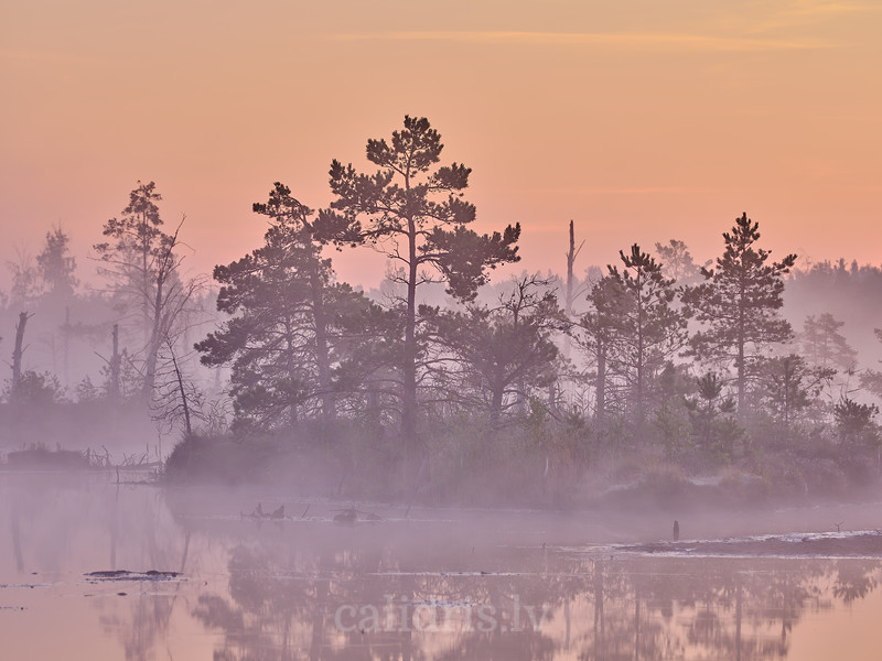 Rīta migla pie Liela Ķemeru tīreļa