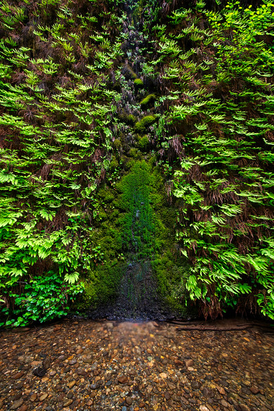 Wall of Ferns