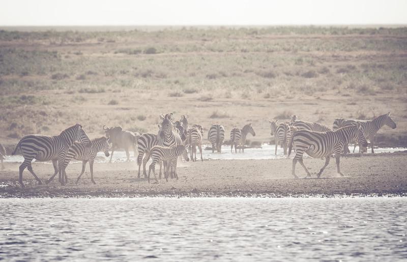 Tanzania_Feb_2018-368.jpg