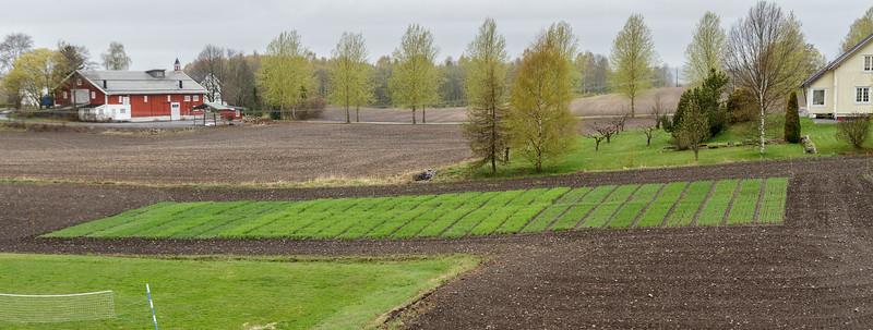 Forsøksfelt med høstkorn