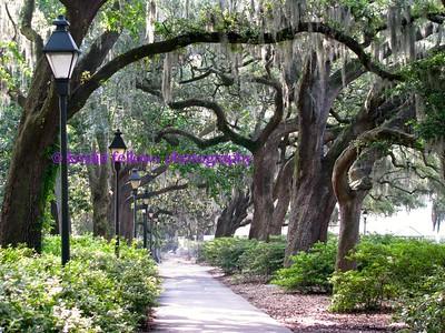 Scenes from Savannah
