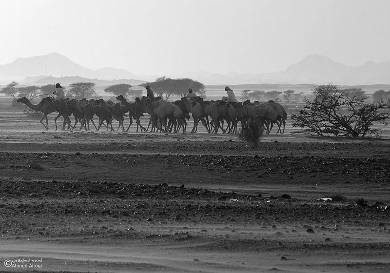 Oman - BW (241)- B&W.jpg