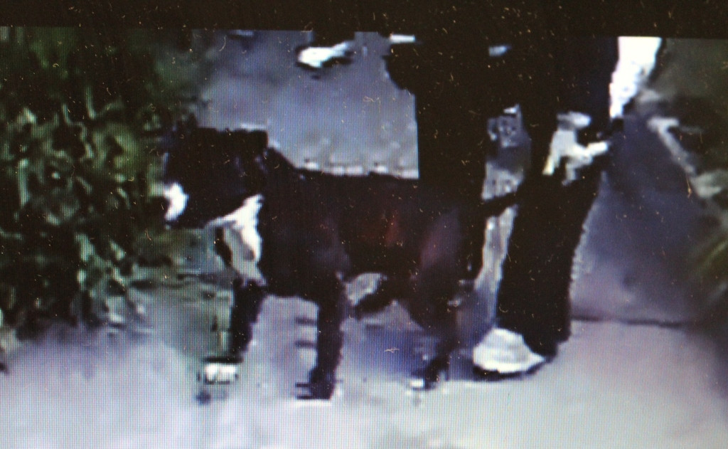 . Several videos obtained by the San Francisco Police Department show dog fighting, and people looking on, apparently at a San Francisco public housing property. SFPD is looking for information on the subjects in these still frames.   (San Francisco Police Department)