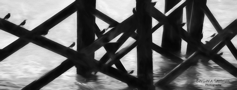 """""""Under the Pier ... Waiting for Lunch"""" - City Pier, Southport NC"""