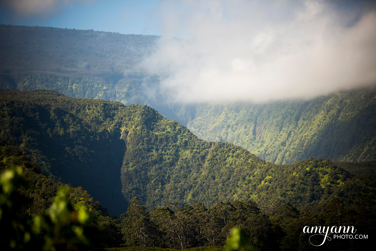 hawaii_amyannphoto_34