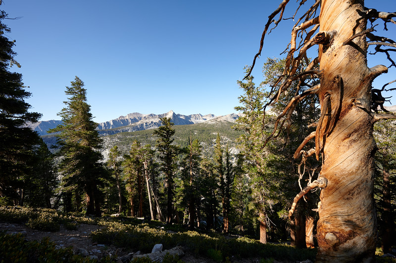 Great Western Divide and Bristlecone pines