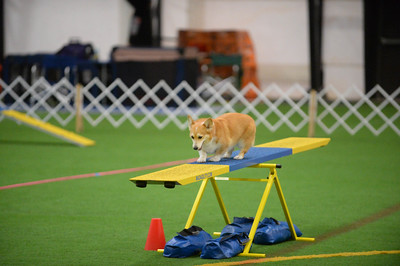 Dauphin Dog Training Club AKC Agility Trial October 22-23