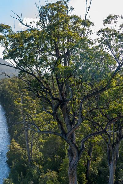 Tasmania-43.jpg