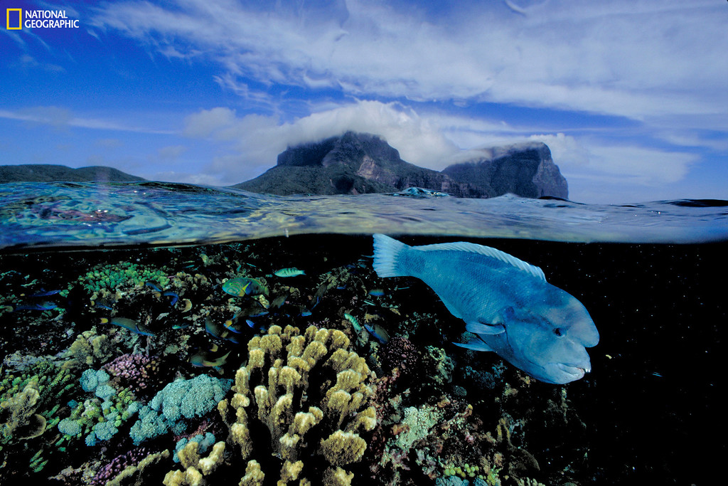 . 1082621 DAVID DOUBILET / National Geographic Lord Howe Island, Australia, 2004 Christie�s Auction: TIMELESS: NATIONAL GEOGRAPHIC AS CELEBRATED BY TASCHEN BOOKS www.christies.com/natgeo