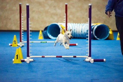 WAG TDAA Agility Trials - April 9-10, 2016
