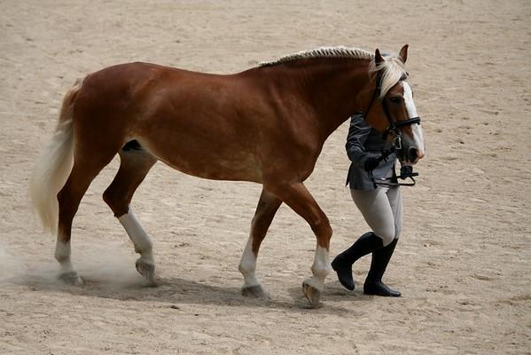 Deerfield Horse Show - June 27, 2015