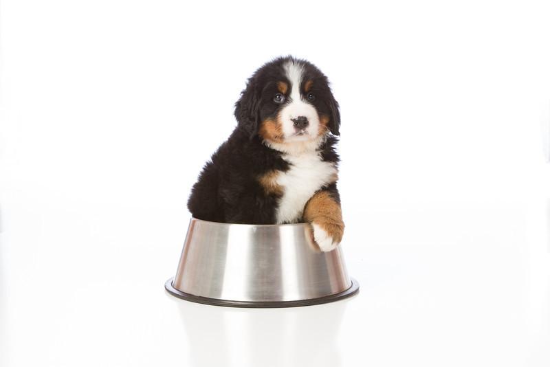 2013-Pearson Pups-Jun02-0336.jpg