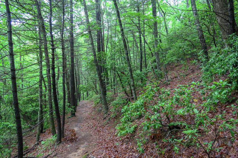 Lower Sidehill Trail -- 2,700'