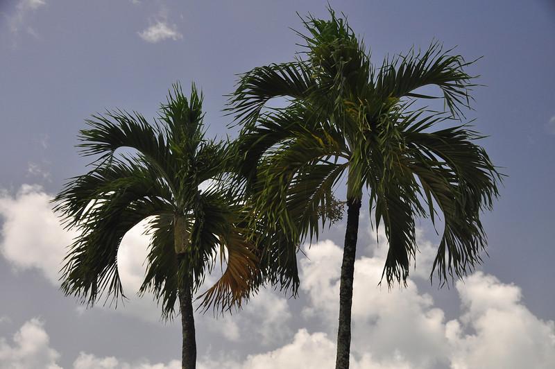 St Lucia 2013-0198.jpg