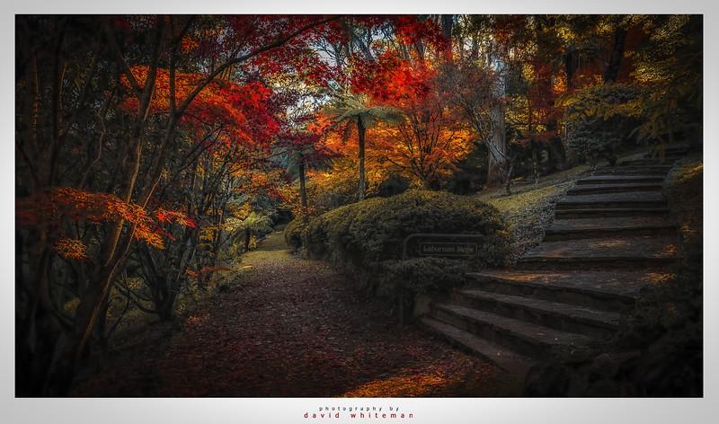 Laburnum Steps