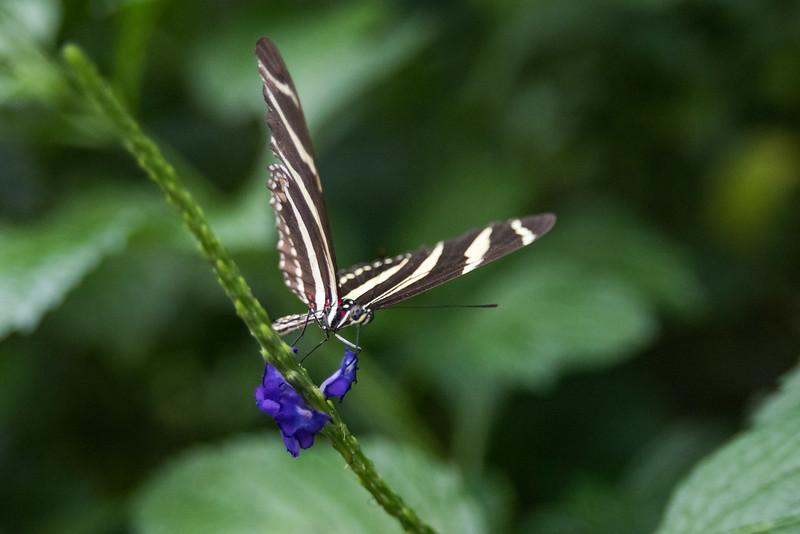 butterfly-275.jpg